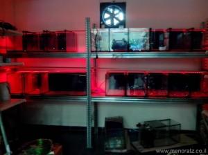 לדים לאווריום RGB